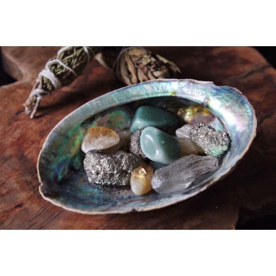 Abalone skjell - Stort 13 - 14 cm - Røkelsesholder